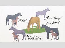 Das Pferd ein Nutztier im Wandel – Biologie online lernen