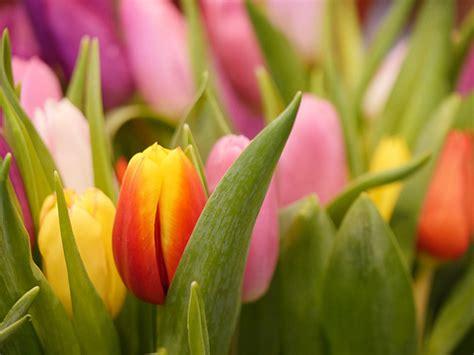 Tips Planting Fall Bulbs by Planting Fall Bulbs 6 Fast Tips Faddegon S Nursery Inc