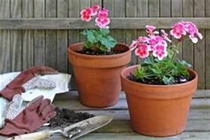 Wann Geranien Pflanzen : geranie ~ Lizthompson.info Haus und Dekorationen