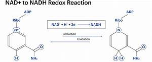 And Nad Reaction Diagram