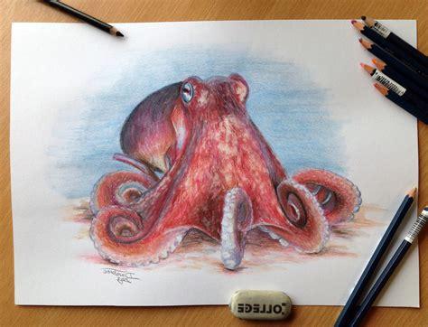 realistic octopus drawing realistic octopus drawing
