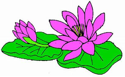 Lily Clipart Clip Water Pad Lilly Flower