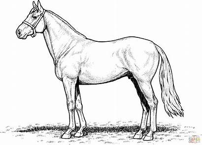 Horse Coloring Pages Draft Realistic Printable Horses