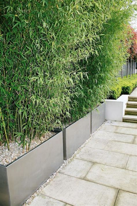 Idée Haie De Bambou En Jardinières  Design Jardin