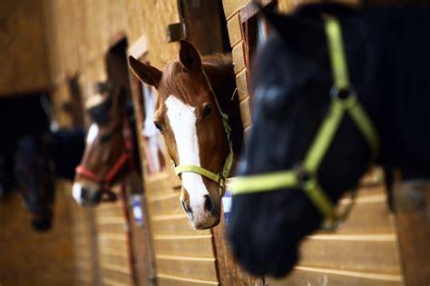 cost    horse  millbry hill