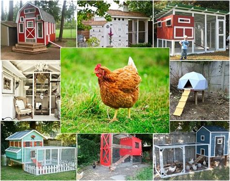 20 Clucking Adorable Homemade Chicken Coops