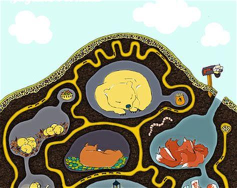 hibernation cliparts   clip art