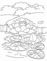 Pond Fish Coloring Getdrawings Drawing sketch template