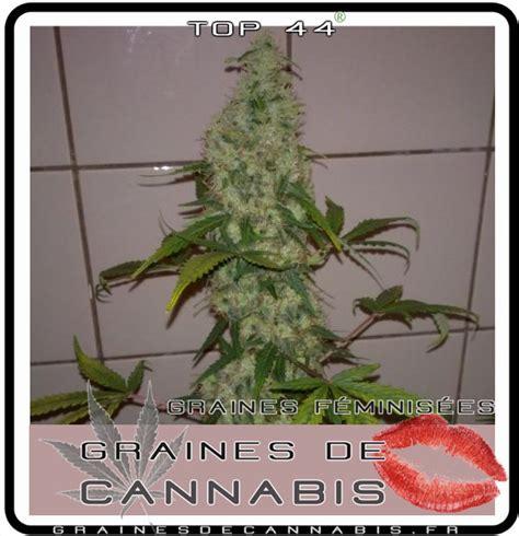 cultiver du cannabis en interieur cannabis facile pour l int 233 rieur