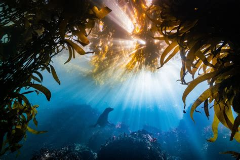 winning    ocean art underwater photo