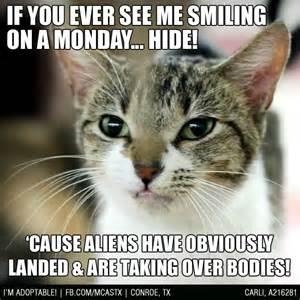 Funny Monday Cat Memes