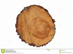 Achat Tronc Arbre Decoratif : coupez le tronc d 39 arbre donnant un avis des yearrings d ~ Zukunftsfamilie.com Idées de Décoration