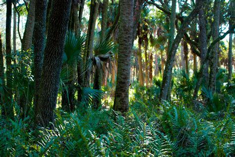 florida trail tosohatchee florida hikes