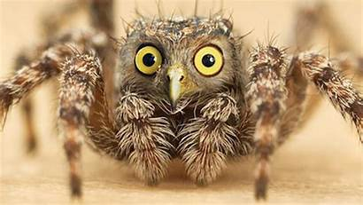 Animal Hybrids Terrifying