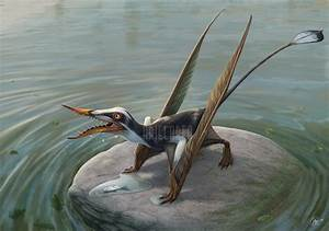 Rhamphorhynchus Pictures & Facts - The Dinosaur Database