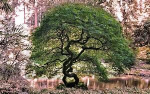 Baum Am Wasser : hintergrundbilder b ume wald garten see wasser ~ A.2002-acura-tl-radio.info Haus und Dekorationen