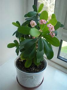 House Plant West London Waste