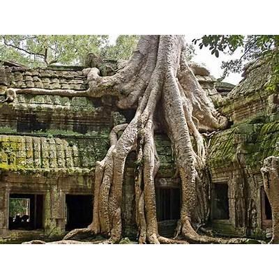 Ta Prohm: Tomb Raider Temple in Angkor Cambodia