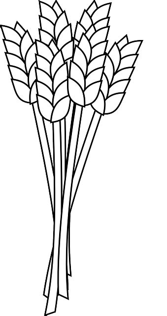 wheat grain agriculture  vector graphic  pixabay