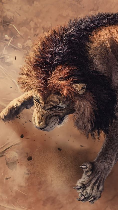wild african lion  wallpapers hd wallpapers id