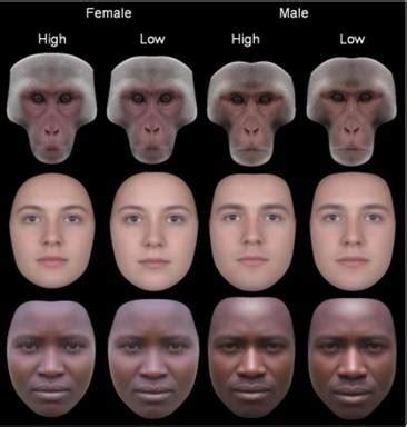 sexiness  facial symmetry  cultures