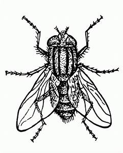 Fly Coloring Pages