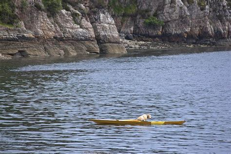 Boat Mechanic Salary Uk by In Pictures Pet Labrador Steals Kayak And Has To Be