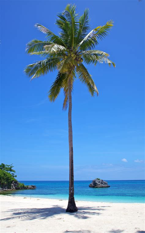 artificial palm tree how to use trigonometry to measure the height of a tree