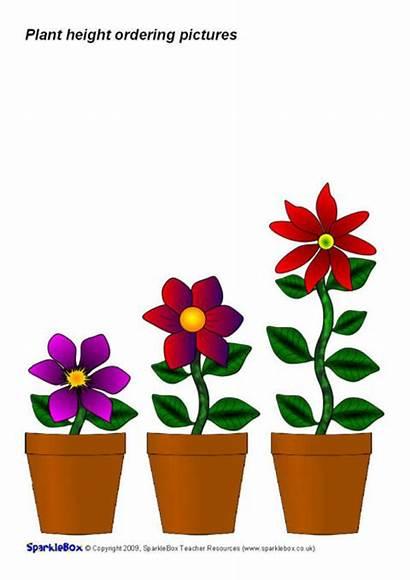 Height Ordering Sparklebox Plant Superlatives Comparatives