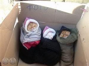 Homeless cats - Daily Cuteness