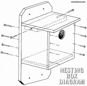 Nest Box Coloring Pages