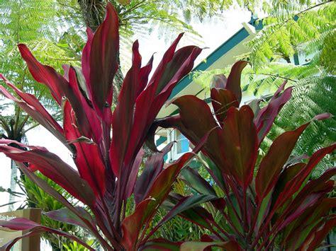 Tropical Far North Queensland