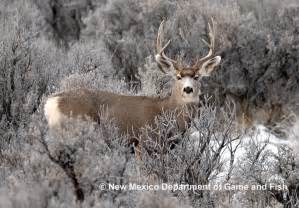 New Mexico State Animal