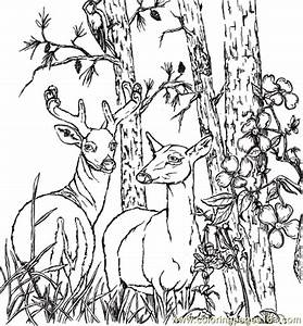 Whitetail Deer Coloring Pages Bestofcoloringcom