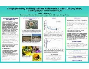 pin scientific posters on pinterest With scientific poster ppt templates powerpoint