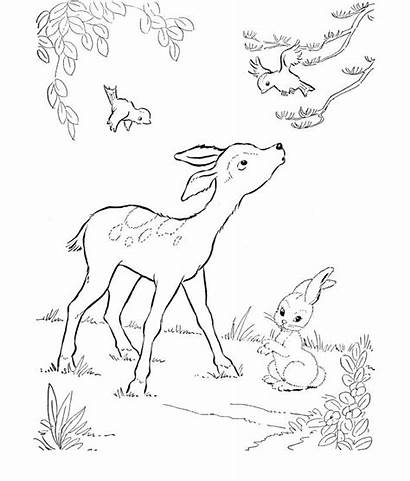 Deer Coloring Template Animal Templates Printable Pages