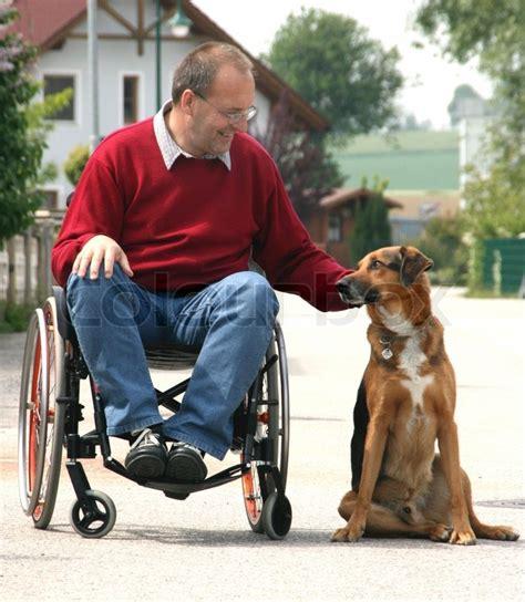 uheld dyr rullestol stock foto colourbox
