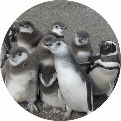 Lana Penguins Labs Sustainability