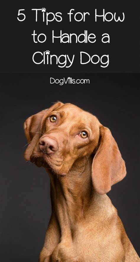 tips    handle  clingy dog dogvills