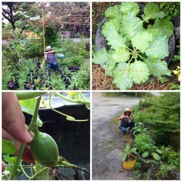 การปลูกพืชผักสวนครัวบนเนื้อที่จำกัด   บ้านสวนพอเพียง