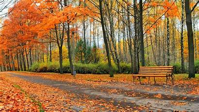 Autumn Fall Leaves Path Nature Trail Forest