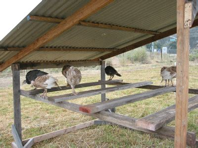 turkey coop plans turkey shelter homestead raising poultry pinterest shelter coops and chicken shelter