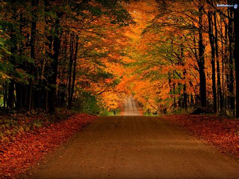 Fall Road Iphone Wallpaper by Free Fall Screensavers And Wallpaper Free Orange Autumn