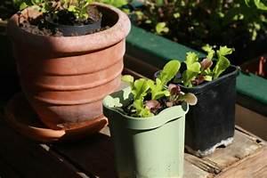 Balkon Ideen Pflanzen : bio garten auf der eigenen terrasse einrichten ~ Lizthompson.info Haus und Dekorationen