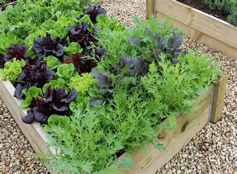 Easy Vegetables To Grow  Quiet Corner