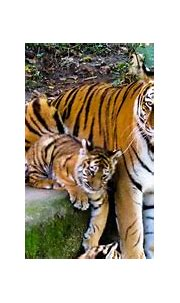9 Places in India to spot the Tiger, India's national animal