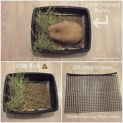 25 best ideas about bunny home pet bunny rabbits rabbits and bunny care