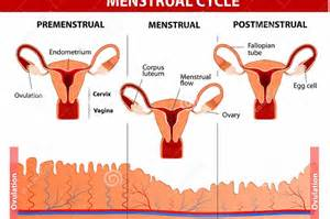 Causes of premenstrual syndrome and its symptoms - Kenyatta University ... Premenstrual Syndrome