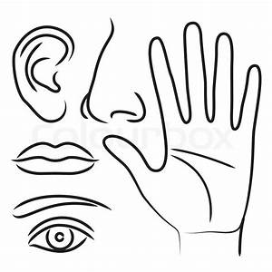 Sensory Organs Hand  Nose  Ear  Mouth And Eye