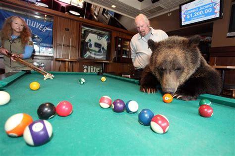 billy  grizzly bear plays pool    pub